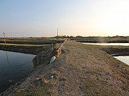 Fish farm, Edjmiatsin