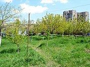 Orchard, Yerevan, Arabkir